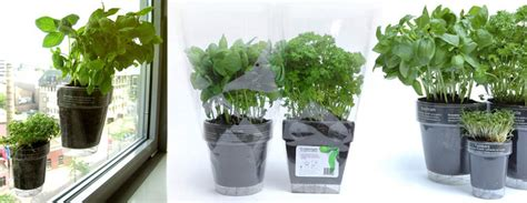 Suction Cup Planter by Windowherbs Transparent Suction Cup Herb Pots The