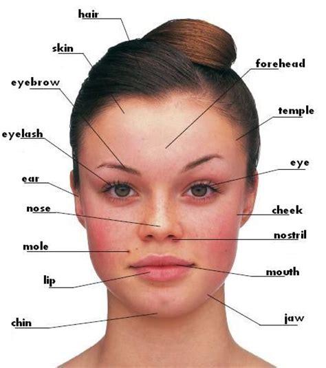 hair style and gap between chin and ear lobe face hair skin eyebrow eyelash ear nose mole lip