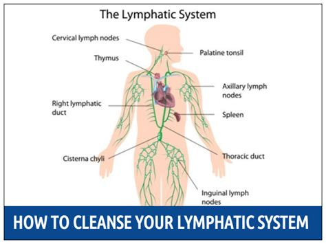 How To Detox System From by How To Cleanse Your Lymphatic System Boldsky