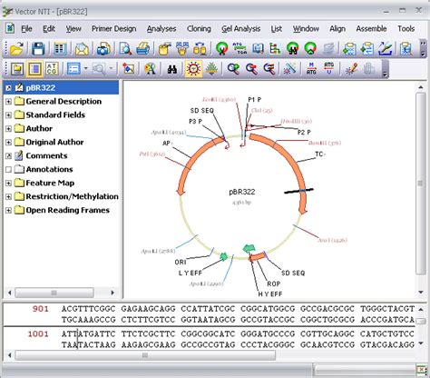 vector nti tutorial cloning plasmid drawing and sequence analysis clonespace
