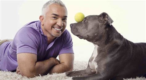 cesar millan s lessons from the pack stories of the dogs who changed my books travel into the of nation with
