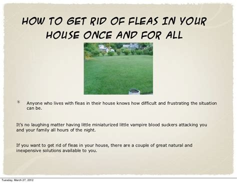fleas in house how to get rid of fleas in your house