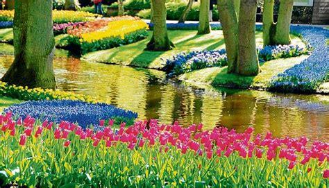 imagenes de jardines y rosas jardines de keukenhof un para 237 so de flores en holanda fotos