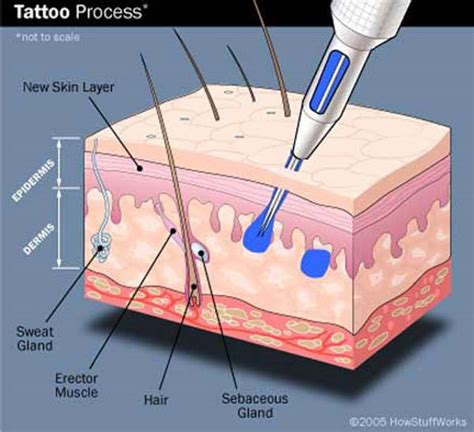 tattoo pain diagram for permanent work needles ink into skin