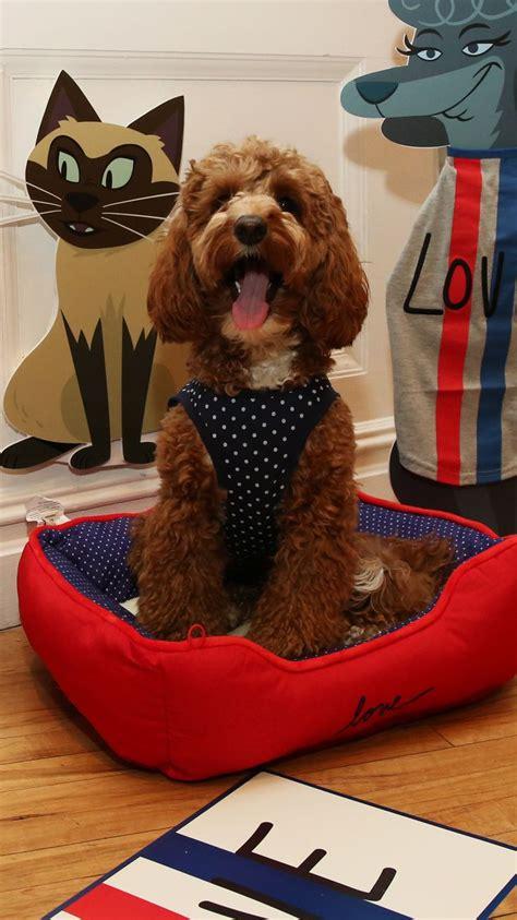 ellen boat dog bed martha stewart pet bed boat bed bedding and bedroom