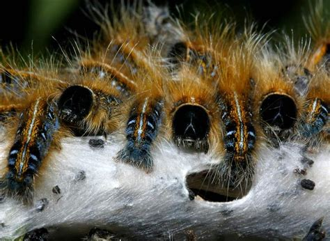 caterpillars animals blog