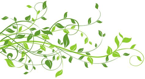 leaf clipart green leaves clip cliparts