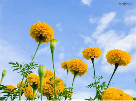 themes of the story marigolds order essay online marigolds short story summary xbn