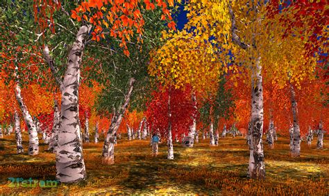 The In Autumn birch trees autumn www pixshark images galleries