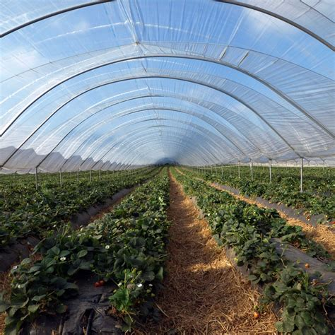 Plastik Green House Ultraviolet 6 sun selector uva clear greenhouse 4 year 6mil per sq ft greenhouse plastic