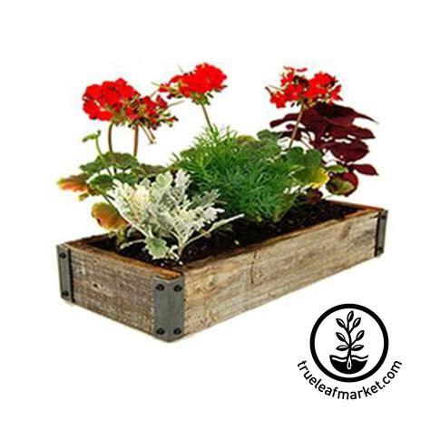 indoor flower garden kit herb kits farmer sprigli herb garden kits indoor
