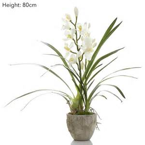 Warehouse Vases Wholesale Cymbidium Orchid In Pot Accessories Emac Amp Lawton