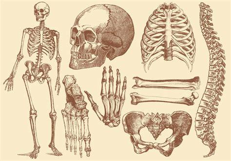 A Of Bones outlander forastera