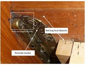 pesticide for bed bugs bed bugs pesticides assured environmental