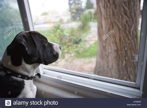 waiting for owner waiting for owner to come home stock photo royalty free image 11926363 alamy
