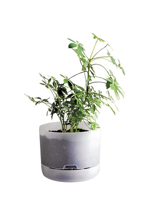 mr kitly decor self watering plant pots cool hunting small wonder the saturday paper