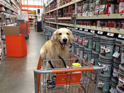 are dogs allowed at home depot 33 friendly stores