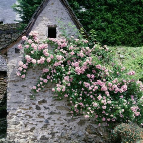 climbing plants for south facing walls gardening advice on how to choose the right climbers