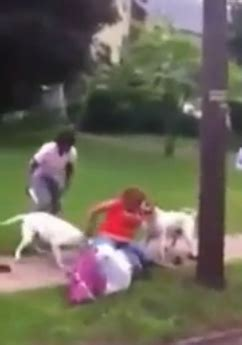 attacking new puppy captures two american bulldogs attacking before they are dead by