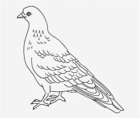 colour drawing free wallpaper pigeon coloring drawing