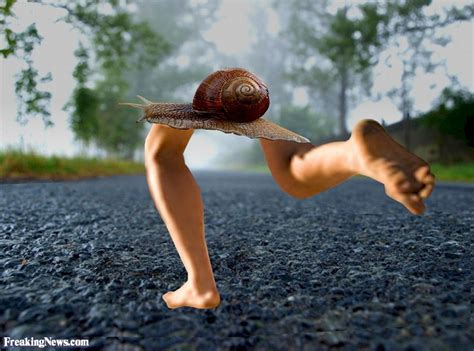 With Legs by Snail With Legs Pictures Freaking News