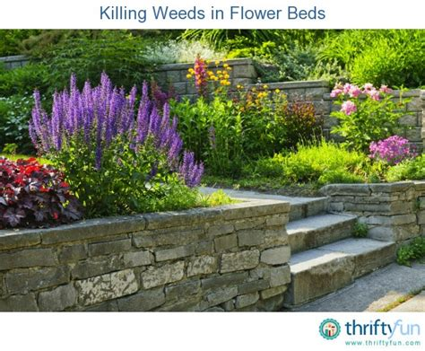 how to kill weeds in flower beds killing weeds in flower beds thriftyfun