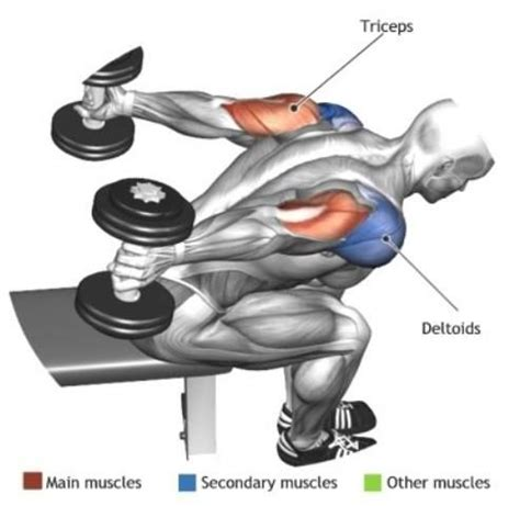 Mike Chang Bench Press by Triceps Seated Bent Over Two Arm Dumbbell Tricep