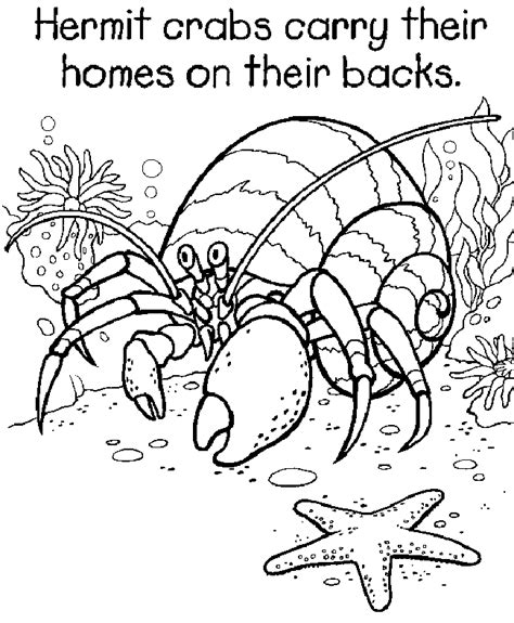 Hermit Crab Coloring Page Eric Carle