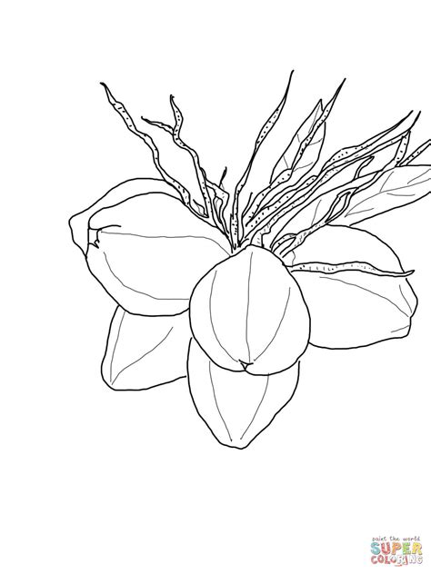 pin coloring page coconut tree img 13356 on pinterest