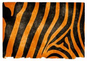 free stock photos rgbstock free stock images tiger
