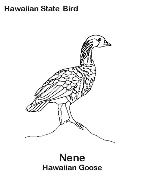 hawaiian birds coloring pages when you have teammates just as talented by sue bird