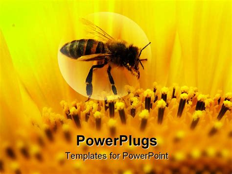bee powerpoint template powerpoint template honeybee sitting on a sunflower