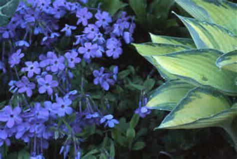 full shade perennials shade garden expert