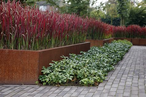 tuin van de baron imperata cylindrica red baron kopen tuincentrum nl