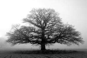 trees black  white photography art  sale prints