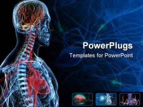 Anatomy Powerpoint Templates by 3d Rendered Anatomy Illustration Of A Human Shape
