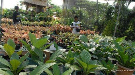 peluang usaha sentra tanaman hias  penjaringan jakarta