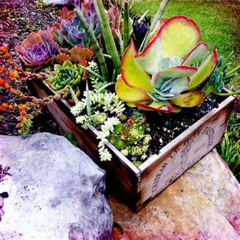 planting succulents container garden ideas 171 bombay outdoors