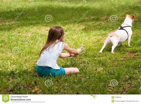 pulls on leash pulling at leash royalty free stock photos image 4799018