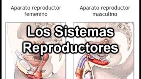 aparato reproductor masculino youtube imagenes aparato reproductor masculino aparato
