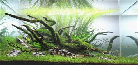 japanese aquascape aquascaping styles by george farmer uk aquatic plant society