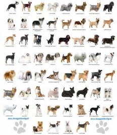 types of dogs all types of dogs pictures to pin on pinterest pinsdaddy