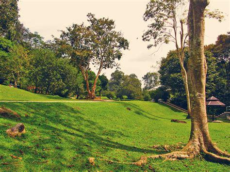 Botanical Garden Penang Botanic Perspective Of Penang