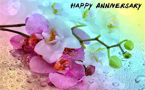 free happy anniversary images special anniversary hd images best wishes cards