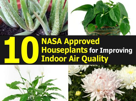 nasa best plants top 10 nasa approved houseplants for improving indoor air
