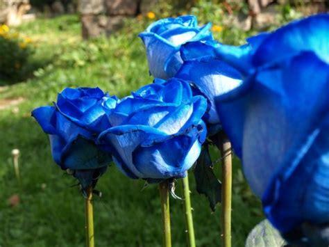 imagenes de flores azules image gallery jardin de rosas azules