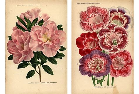 azalea tattoo 1860s linden gloxinia azalea pair i just like the
