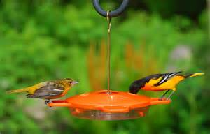 wild birds unlimited april 2011