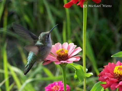 hummingbird blogs hummingbird site of canada home of