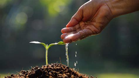 Di Grow letting the seed grow